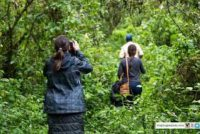 Nord-Kivu : L'ICCN décline son implication dans le viol et kidnapping de 5 femmes à Rusayo (Nyiragongo).