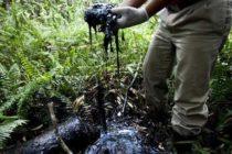 Nord-Kivu : Les structures environnementales s'opposent à l'exploitation pétrolière dans le Pnvi et le Salonga.